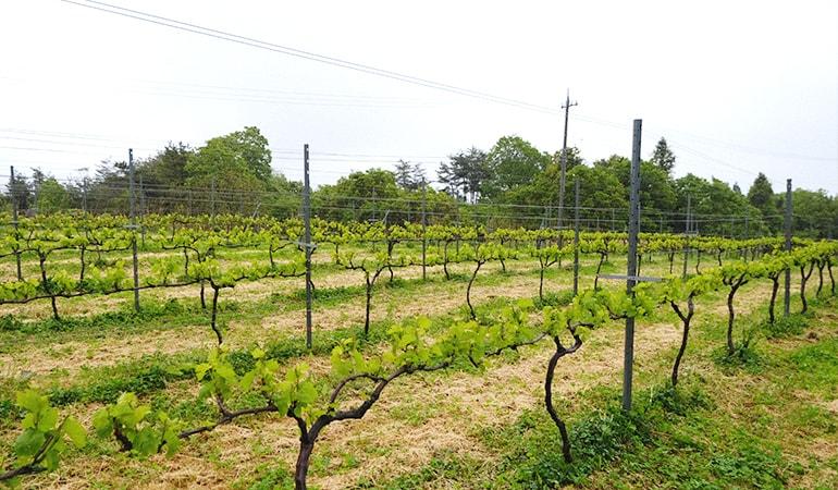 能登ワインの産地