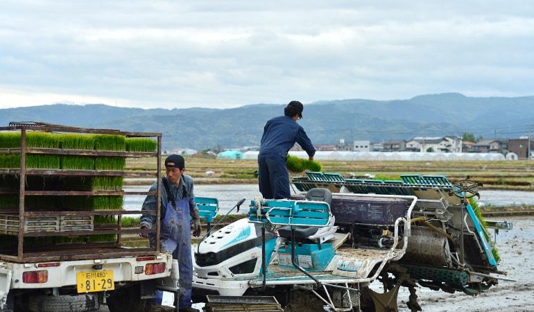 石川田植えの風景